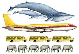 Blue Whale Size Chart